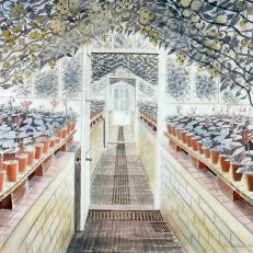 'The Greenhouse: Cyclamen and Tomatoes', Eric Ravilious, watercolour, 1935.